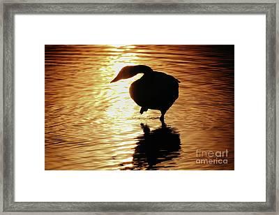 Framed Print featuring the photograph Golden Swan by Tatsuya Atarashi