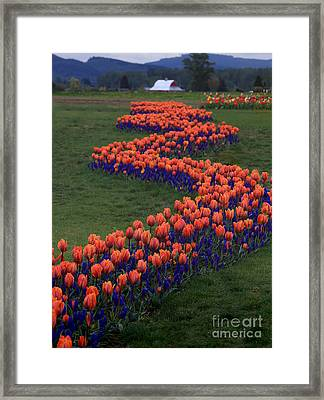Framed Print featuring the photograph Golden Thread by Peter Simmons