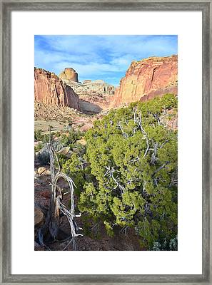 Golden Throne And Capitol Gorge Framed Print