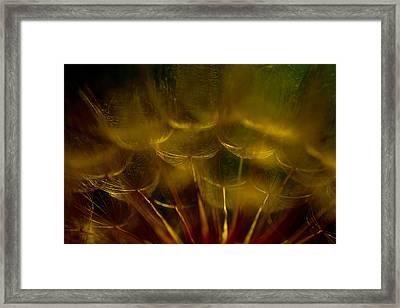 Golden Tinkerbell Homes Framed Print