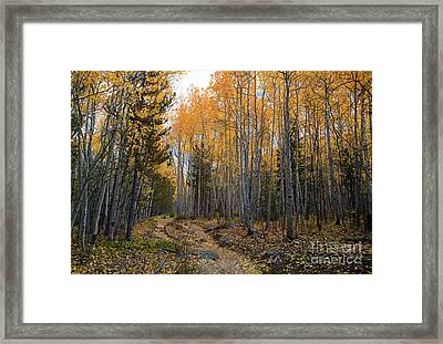 Golden Trail Framed Print by Barbara Schultheis