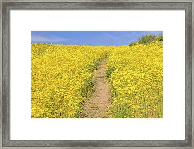 Framed Print featuring the photograph Golden Trail by Marc Crumpler