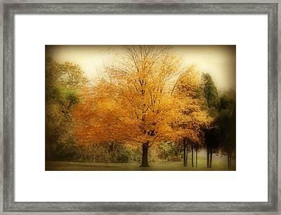 Golden Tree Framed Print by Sandy Keeton