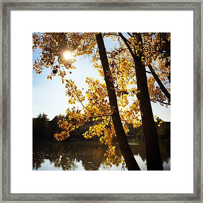 Golden Trees In Autumn Sindelfingen Germany Framed Print
