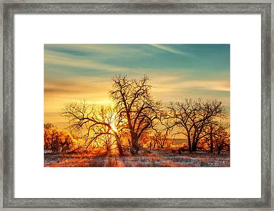 Golden Trees Framed Print by Todd Klassy
