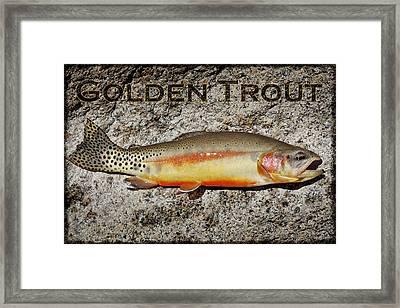 Golden Trout Framed Print by Kelley King