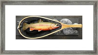 Golden Trout River Slice Framed Print by Eric Knowlton