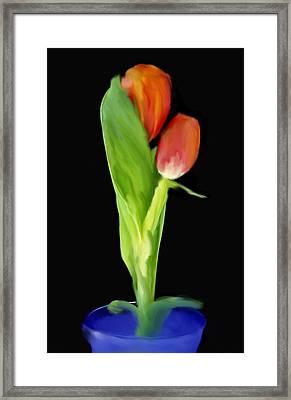 Golden Tulips Framed Print by Daniel D Miller