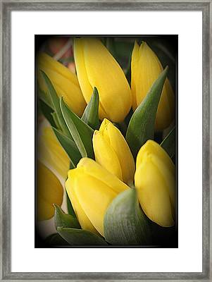 Golden Tulips Framed Print