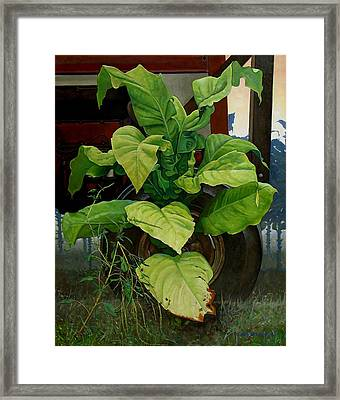 Golden Weed - Smoky Dawn Framed Print