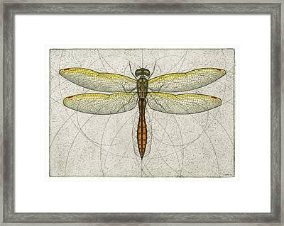 Golden Winged Skimmer Framed Print