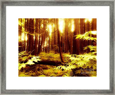 Golden Woods Framed Print by Kim Prowse