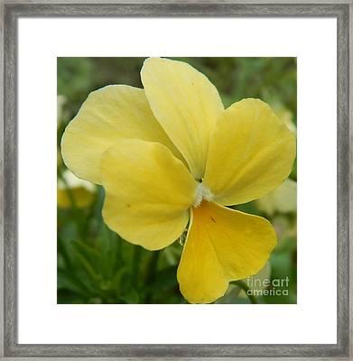 Golden Yellow Flower Framed Print