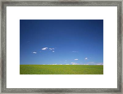 Golden Yellow Of Big Wheat Field,meadows And Closeup Seed With B Framed Print