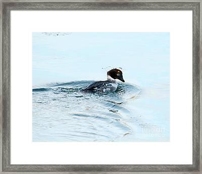 Goldeneye Glance Framed Print by Mike Dawson
