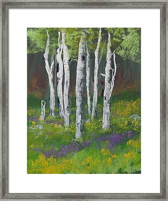 Goldenrod Among The Birch Trees Framed Print