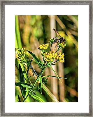 Goldenrod And Wasp - Paint Framed Print