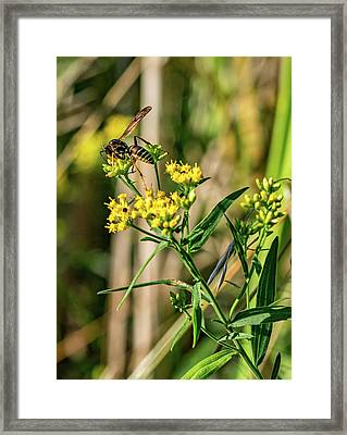 Goldenrod And Wasp Framed Print
