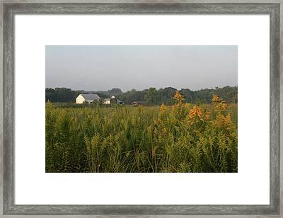 Goldenrod Grove Framed Print