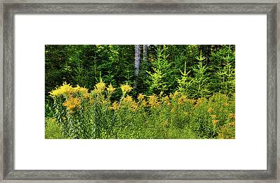 Framed Print featuring the photograph Goldenrod In The Adirondacks by David Patterson