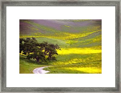 Goldenrod Oak Santa Ynez California 2 Framed Print