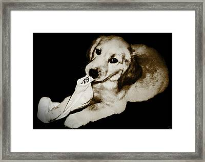 Golden's Best Friend Framed Print by Rora