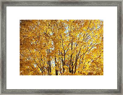 Framed Print featuring the photograph Goldenyellows by Aimelle