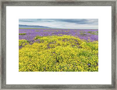 Framed Print featuring the photograph Goldfield And Phacelia by Marc Crumpler