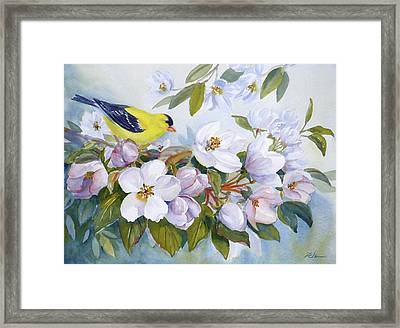 Goldfinch And Crabapple Blossoms Framed Print by Janet  Zeh