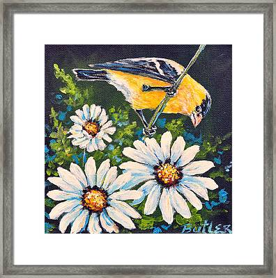 Goldfinch And Daisy Framed Print by Gail Butler