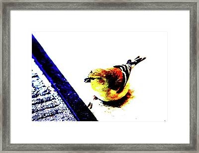 Goldfinch Framed Print by Charrie Shockey