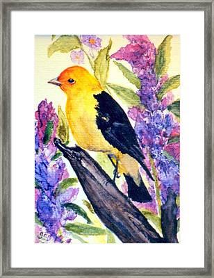 Goldfinch Framed Print by Gail Kirtz
