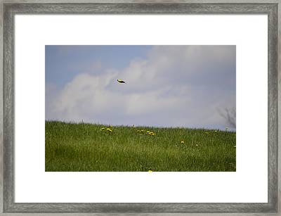Goldfinch Jetting By Framed Print