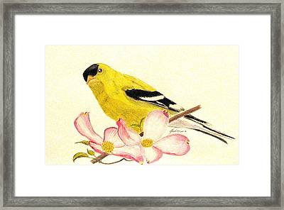 Goldfinch Spring Framed Print by Angela Davies