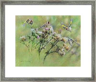 Goldfinches On Thistle Framed Print