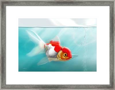 Goldfish 13x19 Framed Print