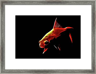Goldfish 2 Framed Print by Tilly Williams