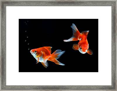 Goldfish Framed Print by Dung Ma