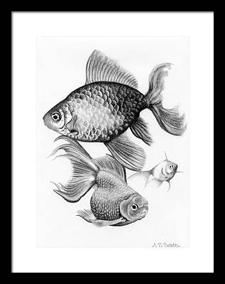 Freshwater Drawings Framed Prints