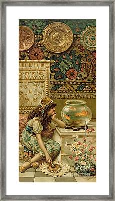 Goldfish Framed Print by William Stephen Coleman