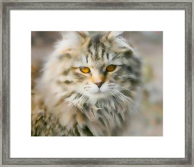 Goldie Golden Eyes Framed Print by Cathy Harper