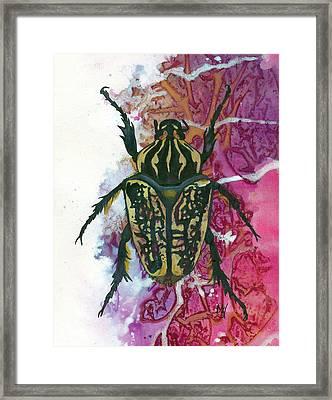 Goliath Beetle Framed Print