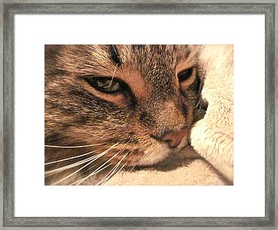 Goliath Framed Print