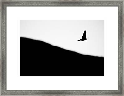 Golondrina Framed Print by Felix M Cobos