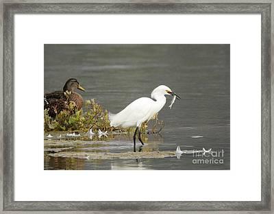 Gone Fishing Framed Print by Marc Bittan