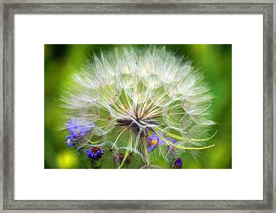Gone To Seed Framed Print by Marty Koch
