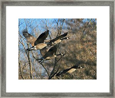 Framed Print featuring the photograph Gone With The Wings by Donna Kennedy
