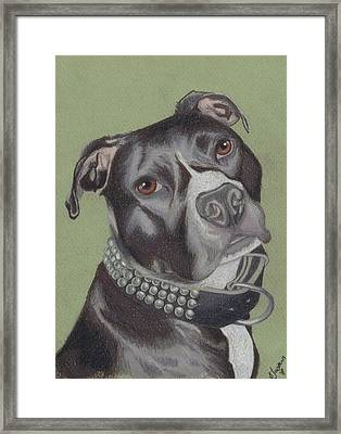 Gonzo Framed Print by Stacey Jasmin