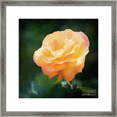 Good As Gold Painted Rose Framed Print
