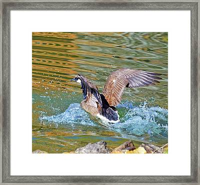Good Bye Framed Print by Susan Leggett